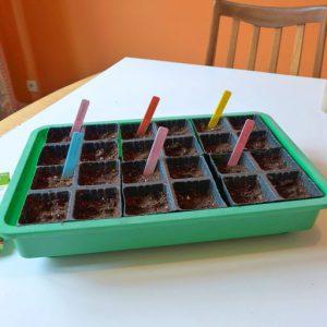 Seed propagation