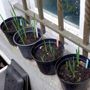 Spare plants