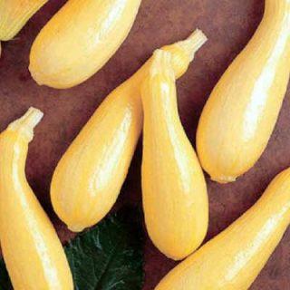Squash Straightneck Yellow
