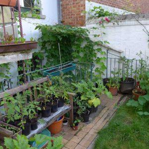 Stairwell garden