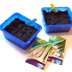 Starting leek seeds