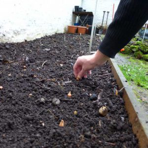 Starting onions outside