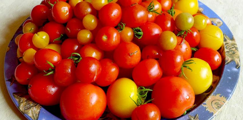 Starting summer tomatoes