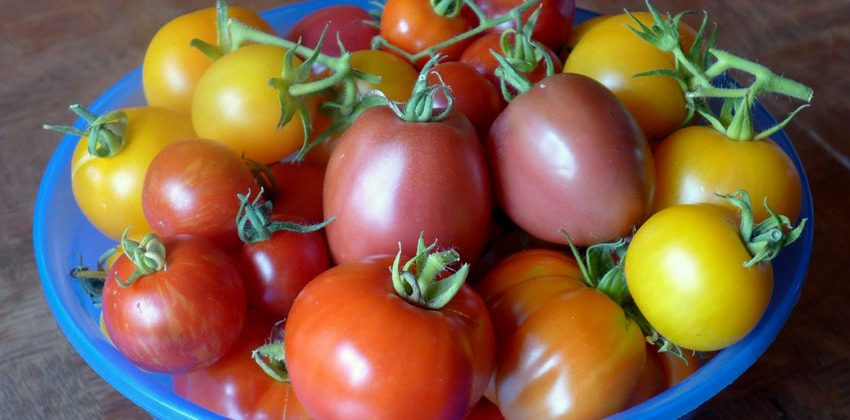 Summer Colours Tomatoes