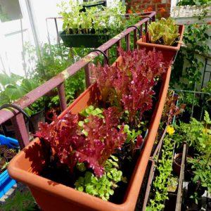 Summer salad in trays