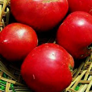 Tomato Anna Russian