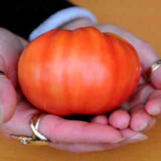 Tomato Caspian Pink