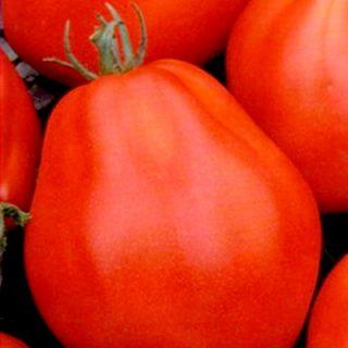 Tomato Chalma