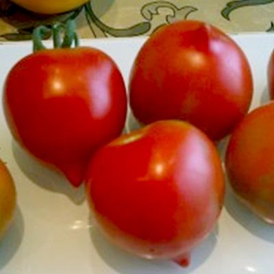 Tomato Kron Prints