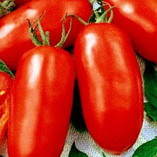 Tomato Moskovskyy Delikates