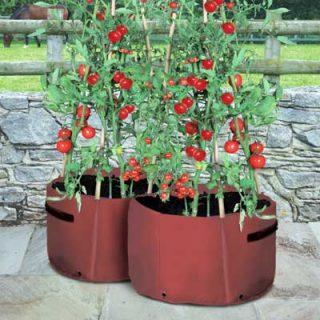 Tomato Patio Planters (x2)