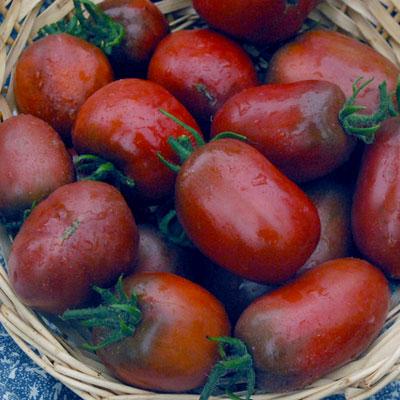 Tomato Purple Russian