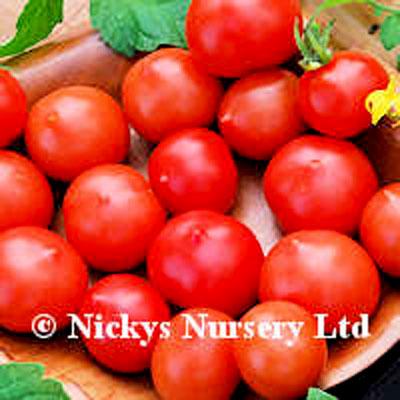 Tomato Riesentraube