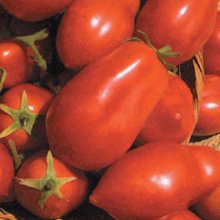 Tomato San Marzano
