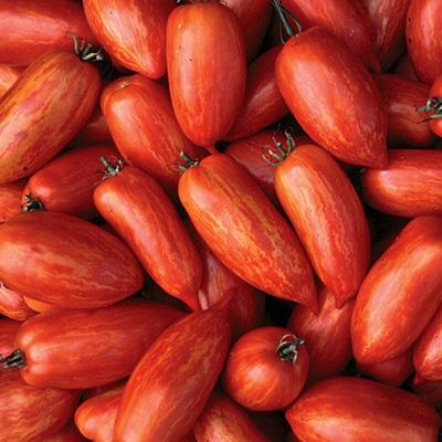 Tomato Speckled Roman