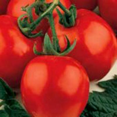 Tomato Sub Arctic Plenty