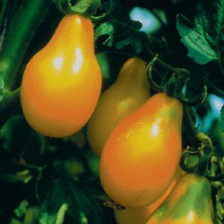 Tomato Yellow Pear