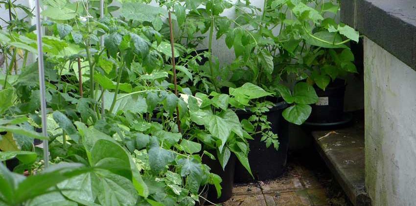 Basement Planting