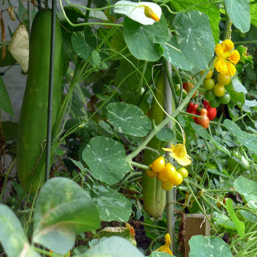 blog-2015-cucumbers-01