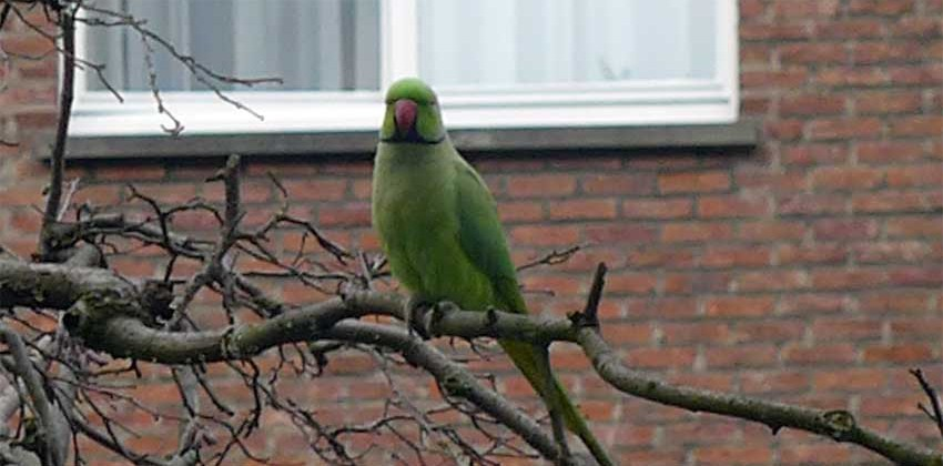 Exotic visitor to the garden