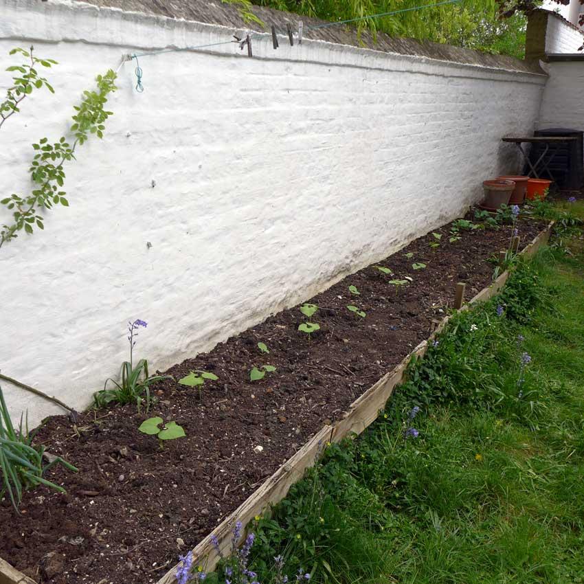 blog-2015-raised-bed-planting-01