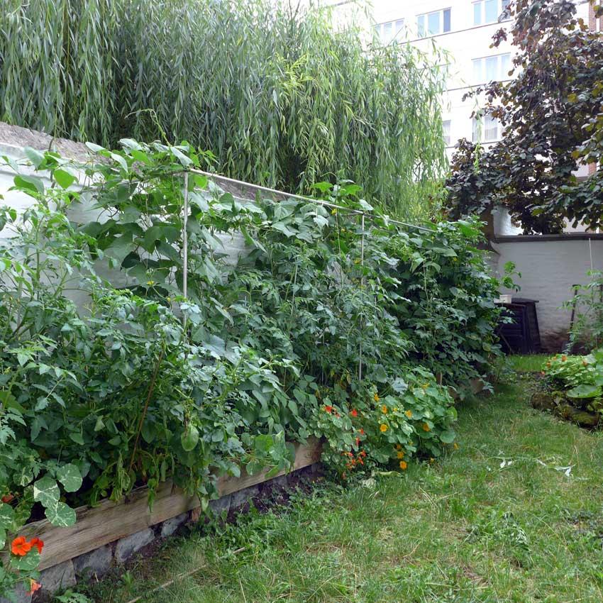 blog-2015-raised-bed-planting-02