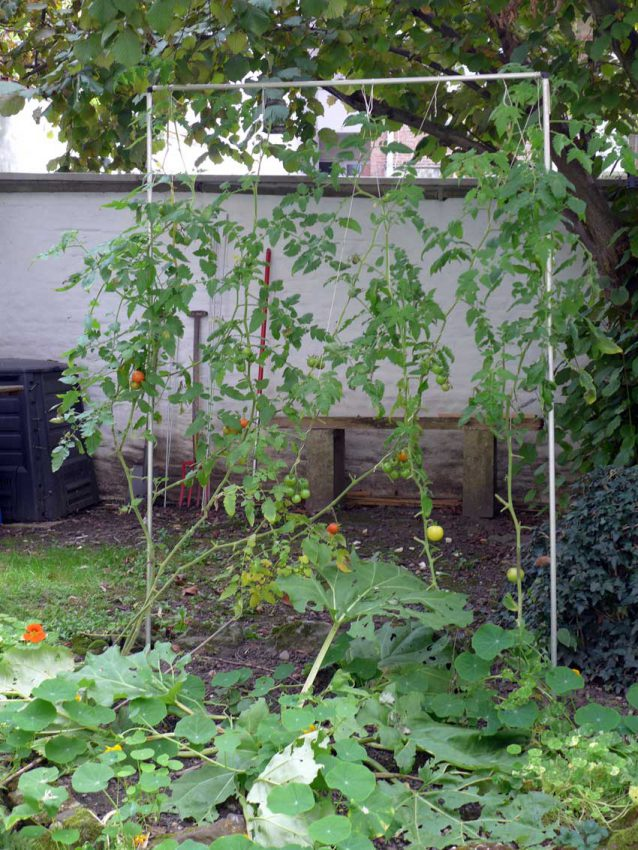 blog-2015-simple-growing-frame-for-tomatoes-01