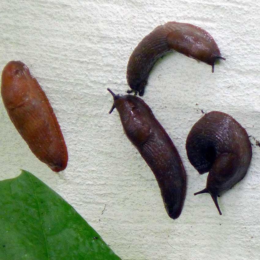 blog-2015-slugs-01
