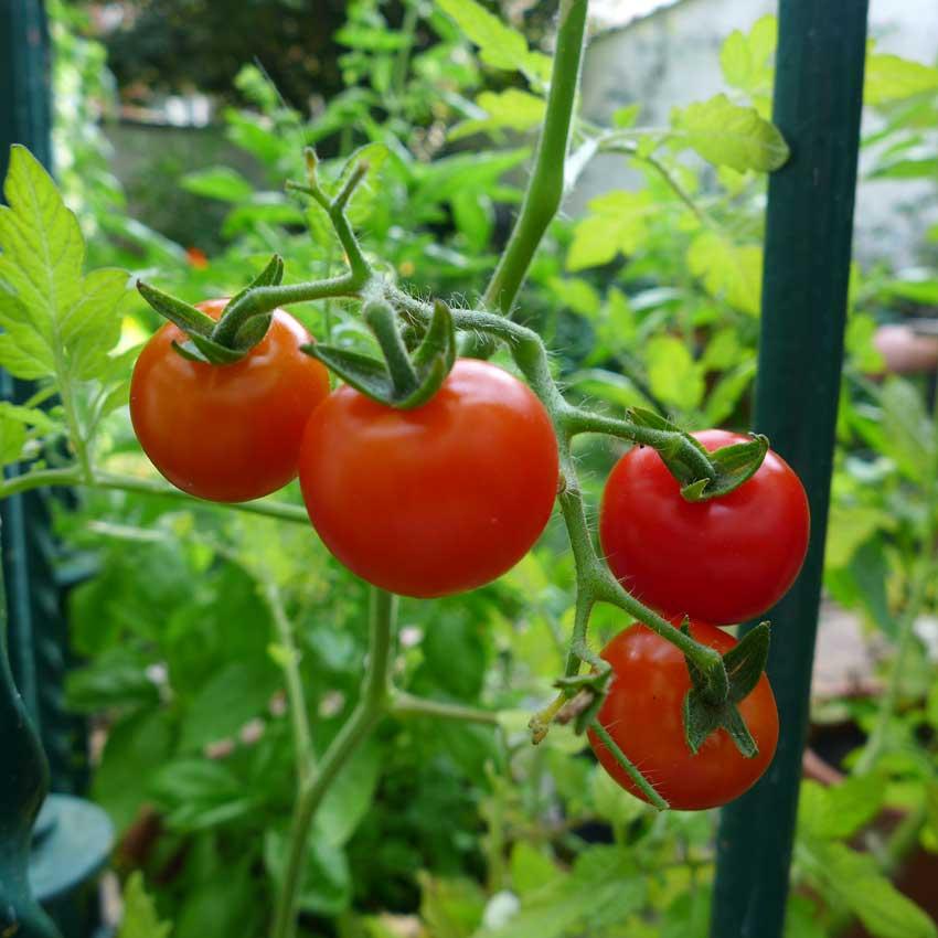 blog-2015-using-heirloom-seeds-01