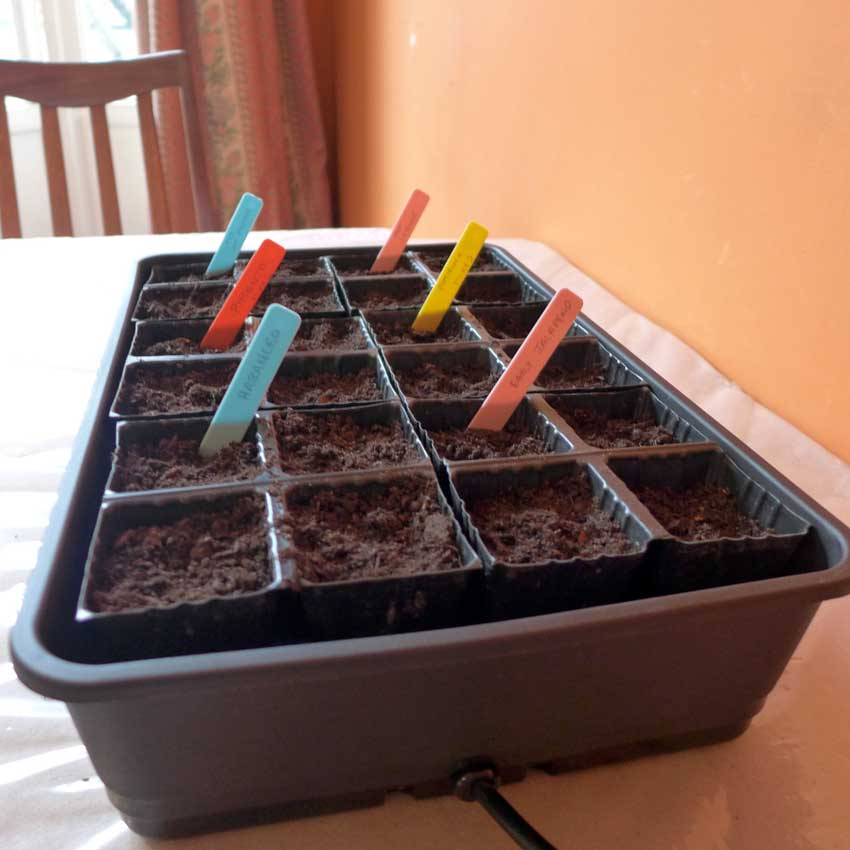 Domestic seed propagators - 6 squares of 4 cells each