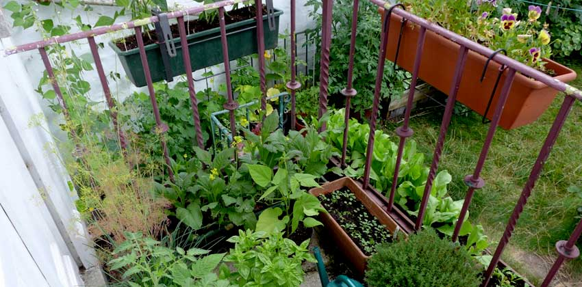 container gardening gallery