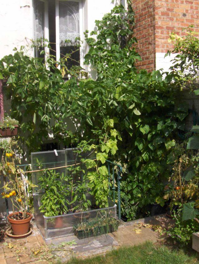 Basement Garden