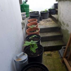 Container Gardening Basement