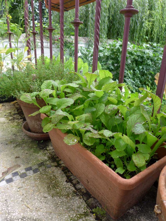 page-growing-salad-in-containers-04