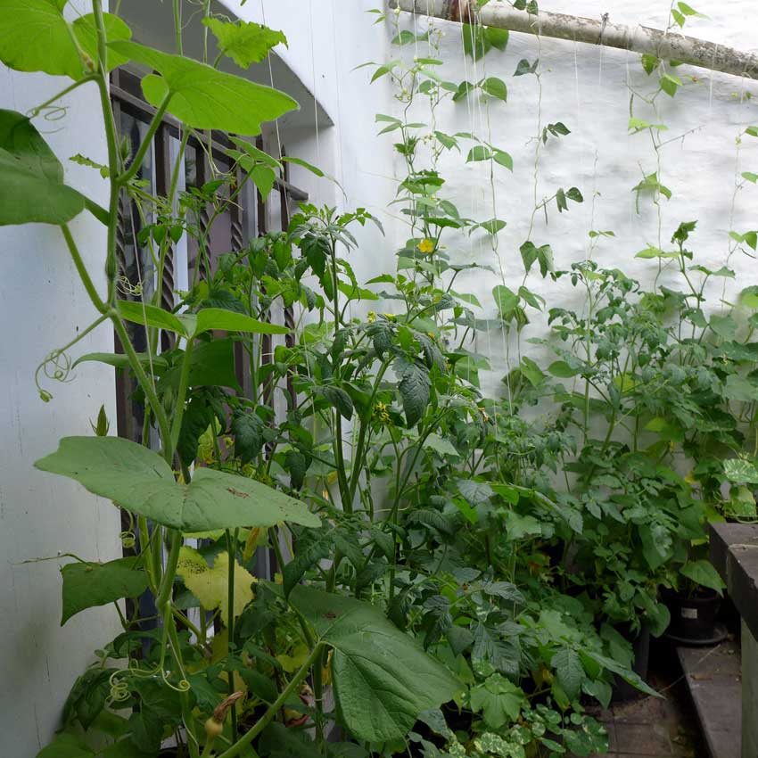 page-vertical-gardening-01