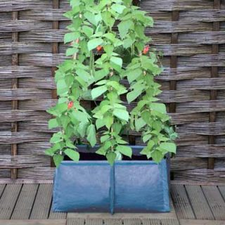 Pea & bean patio planter