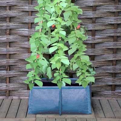 Pea & bean patio planter