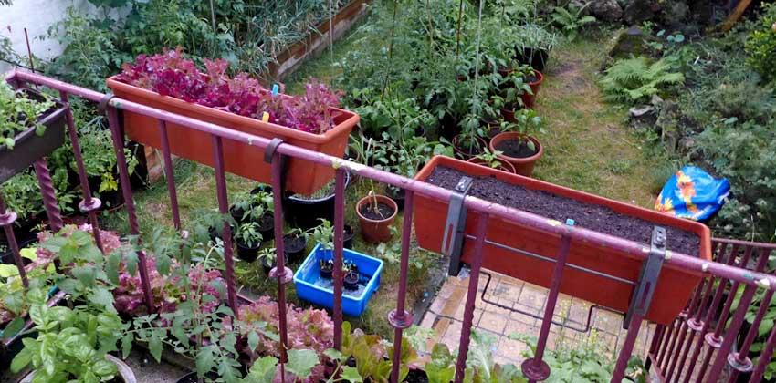 Growing salads love rain