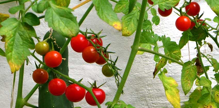 Vertical Gardening Gallery